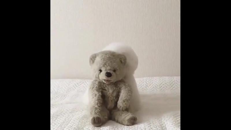 Извините, мистер медведь, я люблю тебя, но это мое видео