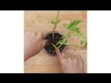 ???Как вырастить овощи, фрукты и зелень у себя на кухне???