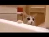 Котик боится, что хозяйка утонет, и пытается её спасти
