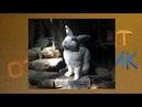 Умный кролик Петрушка