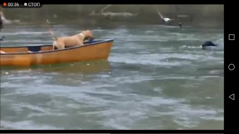 Двое в лодке обе собаки не считая собакиспасаки