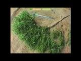 МОЖЖЕВЕЛЬНИК ПОЛЬЗА И ВРЕД плоды можжевельника лечебные свойства, можжевельник применени