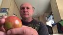 орехи и яблоки и железные пальцы nuts apples and iron fingers