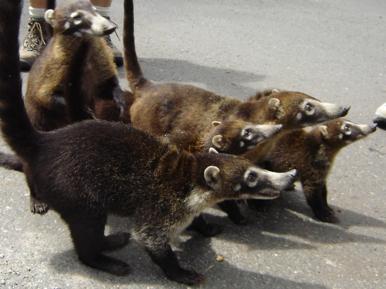 Животные, которых вы совершенно точно не видели.
