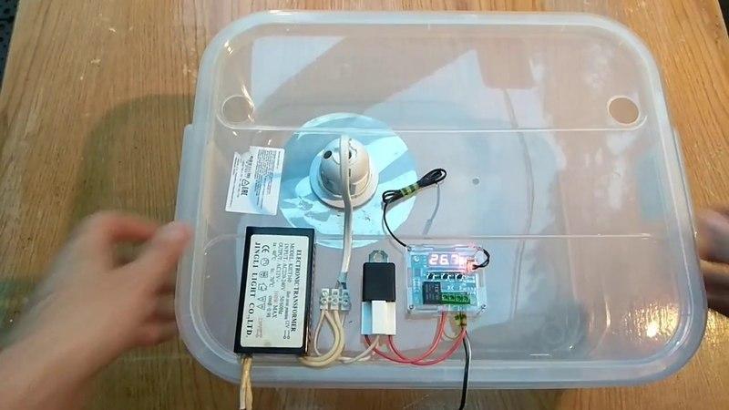 Автоматический брудер для новорожденных перепелят.