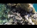 Готова бесконечно любоваться на красоту подводного мира....