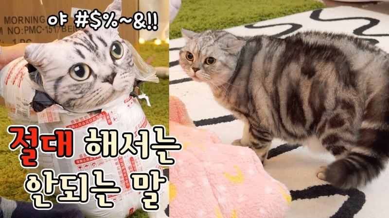 고양이에게 절대해서 안되는말을 했다!! 충격받은 고양이들 - 크리스마스510