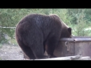 Медведи людей не едят 2