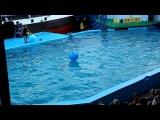 Дельфинарий Архипо-Осиповка 2011 .Игра со зрителями