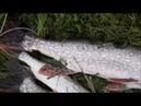 Рыбалка Щука Китайский воблер ловит