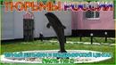 Тюрьмы России Черный дельфин и Владимирский централ Часть 1 из 2 1080p