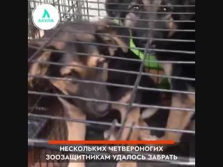 Собаки в заключении | АКУЛА
