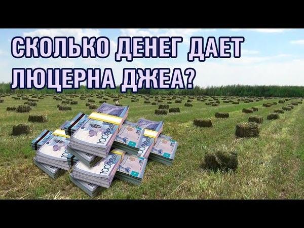 10-серия. Экономический расчет выгоды выращивания люцерны Джеа (28-06-2018)