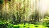 Celtic Fantasy Music Enchanted Elven Melody