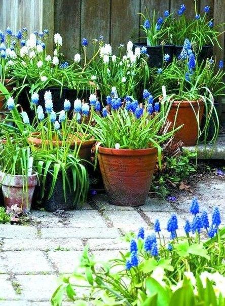 Spring patio Muscary