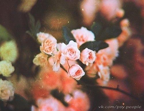 Не желайте друг другу зла, оно к вам однажды вернётся. А пожелание любви счастьем для вас обернётся. Не желайте кому-то слёз, сами от них захлебнётесь. Пожелайте здоровья всерьёз, и сами здоровым проснётесь. Не желайте врагам всех бед, они найдут их сами. Пожелайте им жизни 100 лет. Никогда не бросайтесь словами!