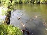 ПРИКОЛ: Надо ж быть таким неудачником и свалиться с тарзанки вместе с деревом в воду :)