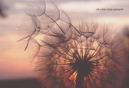 Беды и радости притираются друг к другу. Когда они притрутся друг к другу без остатка, родится счастье. Такое счастье будет нерушимым. Сомнение и вера друг друга поправляют. Когда они полностью поправят друг друга, появится знание. Такое знание будет подлинным.  Хун Цзычэн