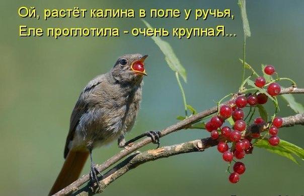 https://cs7066.vk.me/c543106/v543106270/2f040/nF8bokxu1y8.jpg