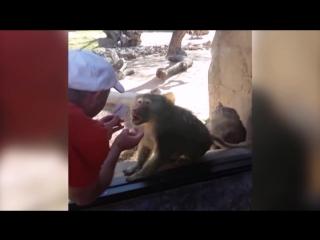 Реакция Обезьян На Магию / Monkeys React To Magic [HD_1080p]