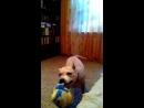 Лошади и собаки с мячиком играются одинаково.