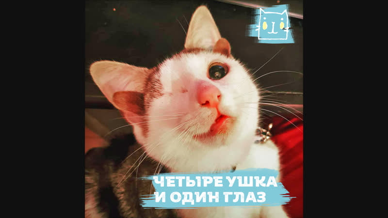 Новая хозяйка для котика с аномалией