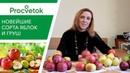Будьте в курсе! Новейшие сорта яблонь и груш белорусской селекции