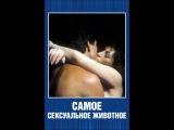 (фильм)(эротика) Самое сексуальное животное (США, 1987 год)