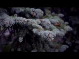 Фолк-Группа Кумовья. Песня Голубая ночь