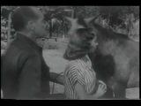 STRAWBERRY ROAN TRAILER 1948 GENE AUTRY