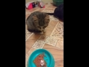 Кошки Амиго