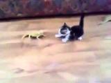 Самый необычный испуг кошки!