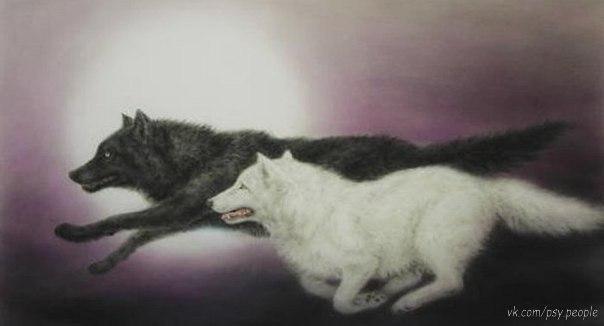 Когда-то давно старик открыл своему внуку одну жизненную истину:  — В каждом человеке идёт борьба, очень похожая на борьбу двух волков. Один волк представляет зло: зависть, ревность, сожаление, эгоизм, амбиции, ложь. Другой волк представляет добро: мир, любовь, надежду, истину, доброту и верность.  Внук, тронутый до глубины души словами деда, задумался, а потом спросил:  — А какой волк в конце побеждает?  Старик улыбнулся и ответил:  — Всегда побеждает тот волк, которого ты кормишь.