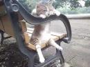 Кот философ размышляет на скамейке ◀ ПРИКОЛЫ 2013 про животных ►