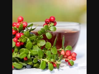 Чайный напиток из сушеных ягод Брусники,