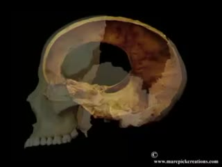3D animation of the cranial movement and the intracranial membranes