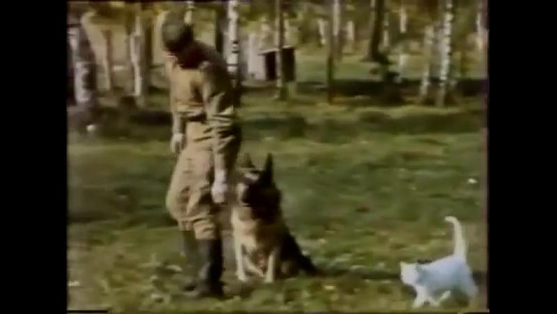Дрессировка собак. Питомник Красная звезда
