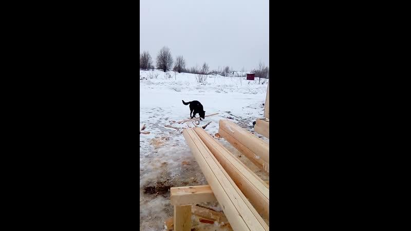 Пёсик на стройке