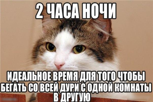 Кошачий юмор - Страница 4 ERJnej585mw