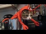 Подборка смешных моментов с животными 2013 год Июль