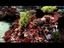 BBC radio underwater movie about happy birthday fishes
