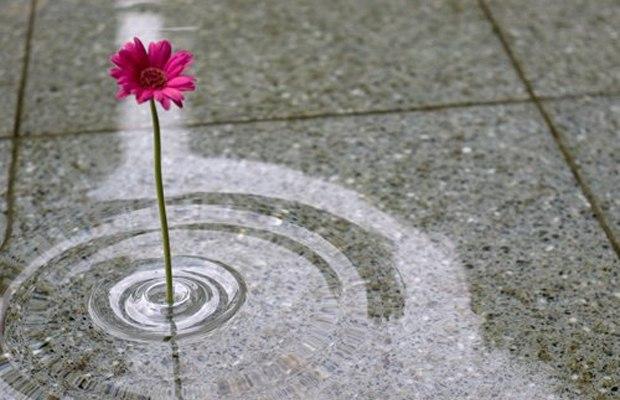 Оригинальные вазы создающие иллюзию парящего цветка