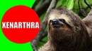 Xenarthrans – Anteater, Sloth, Armadillo Sounds Videos and Photos | Educational Video for Kids