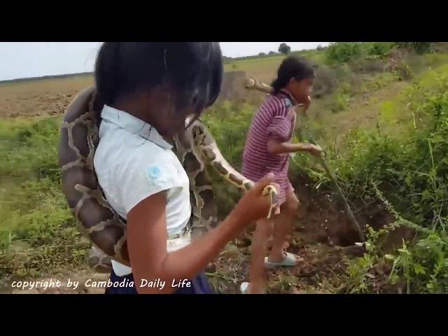 Камбоджа Блокбастер с рисовых полей Cambodia, children and snakes Blockbuster from rice fields 2017