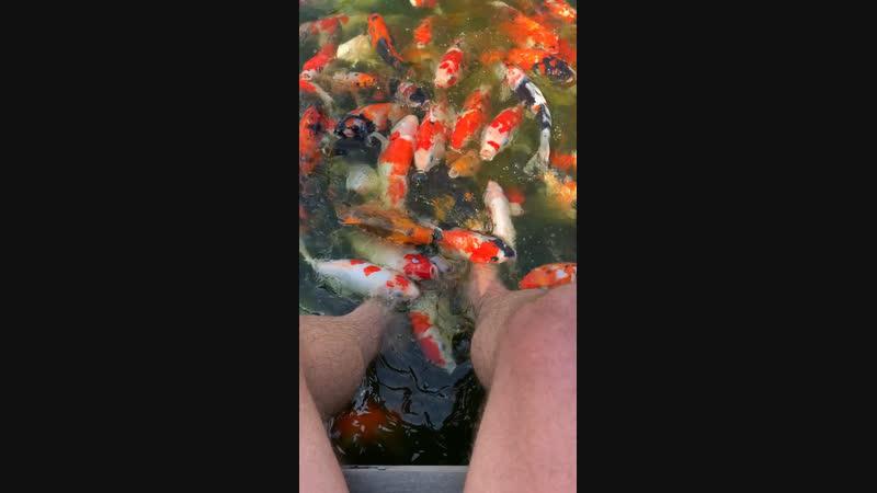 Питерские мужики настолько суровые, что опускают ноги не в аквариум с рыбками, а сразу в пруд!