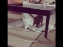 Стол для кота