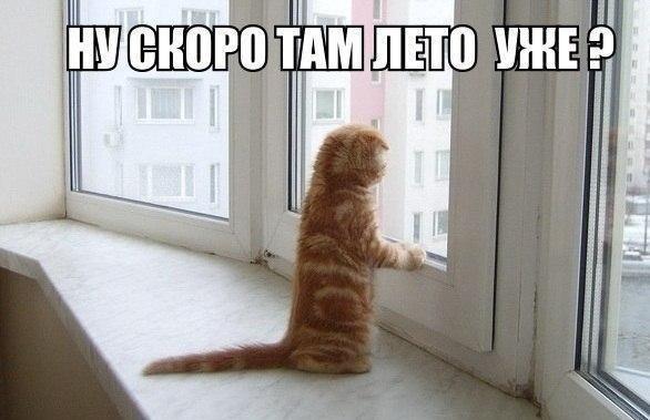 кошка ну скоро там лето уже