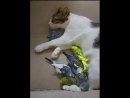 Amazing Cat and budgies living together When Maternal instinct is stronger than predatory instinct