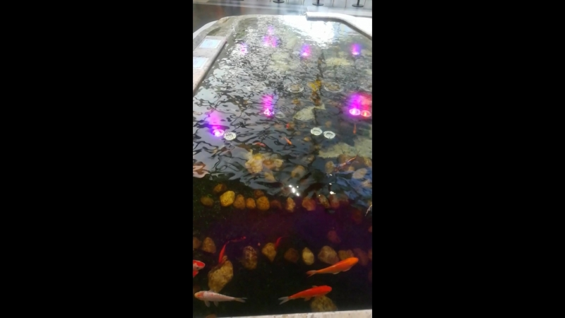 Бассейн с рыбками. МегаГринн
