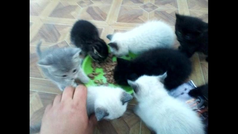 котятки ужинают